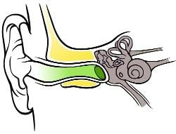 The Outer Ear Functions Parts Of The Outer Ear Pinna